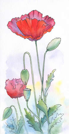 watercolor and ink poppies drawing. vertical hand-drawn illustration Stock Photo