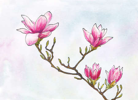 watercolor and ink magnolia twig with flowers and buds