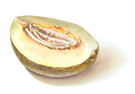 watercolor melon on white. hand drawn illustration Stock Photo