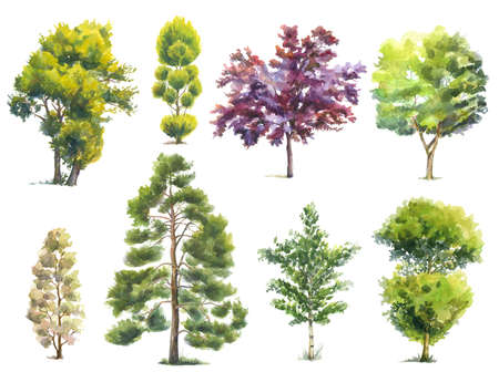 set of watercolor various trees isolated on white