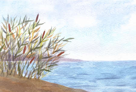 watercolor illustration of reeds and lake, natural outdoors landscape
