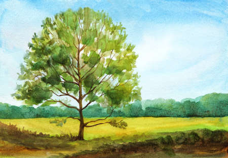 summer landscape with a tree and field. hand drawn watercolor illustration