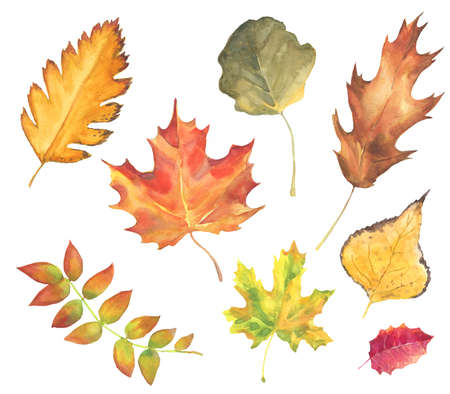 set of watercolor autumn leaves . colorful hand drawn various leaves isolated on white