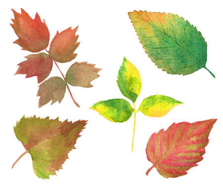 set of watercolor autumn leaves isolated on white. hand drawn various colorful tree leaves