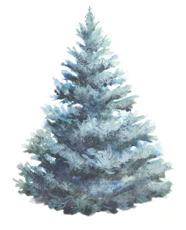 spruce tree watercolor illustration on white. fir-tree hand paint water color