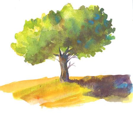 Watercolor tree on white. Stock Photo
