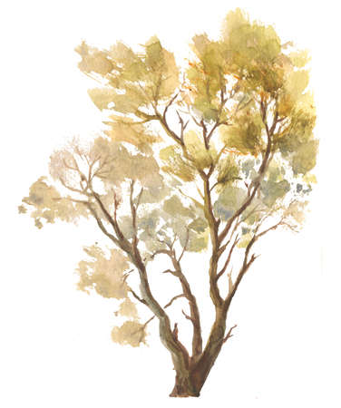single autumn tree watercolor drawing on white background