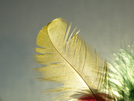Isolated Pure Feather on a Daylight