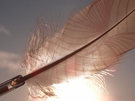 Pluma rosa aislada con un patrón