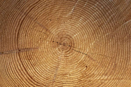 Close up of tree rings photo