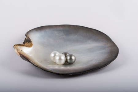 Four big tahitian pearls in a oyster photo