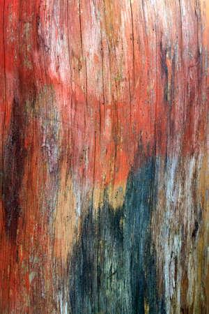 albero: Sezione di albero sotto la corteccia Stock Photo