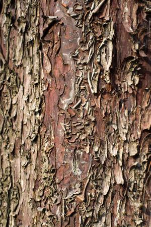 albero: Corteccia di albero morto