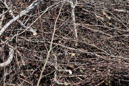 bundle of freshly cut firewood 写真素材