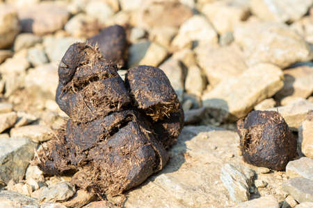 pile of horse poop on mountain trail 写真素材