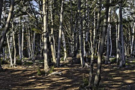 山の中の密集した森 写真素材 - 106800079