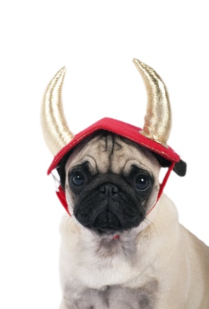 Pug puppy dressed up as a devil