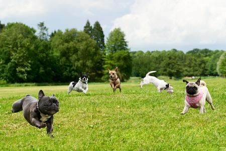 perro corriendo: Pequeños perros en el parque