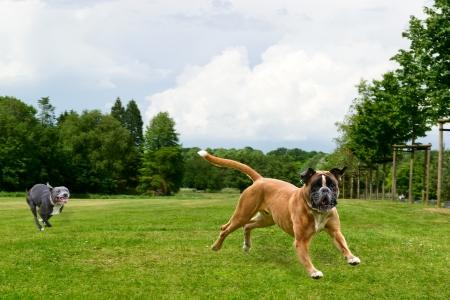 Don�t catch me, please photo