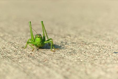 swarm: Green grasshopper