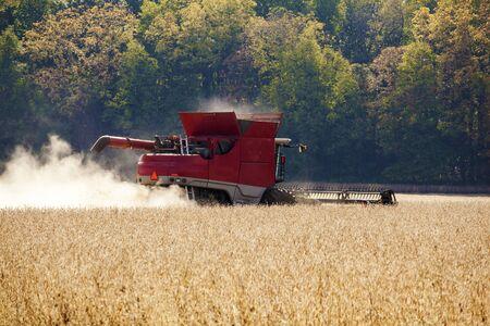 Combine harvesting a soybean crop in a farm field