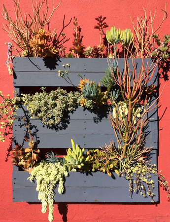 pallets: DIY Hanging Succulent Garden