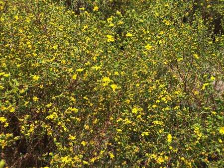 brings: Spring Brings Yellow Wildflowers in a Field