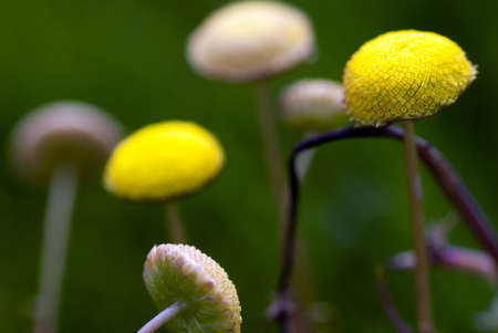 A macro view of tiny yellow wildflowers