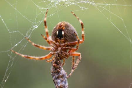 거미는 그것이 붙잡은 곤충의 주위에 웹을 회전시킨다