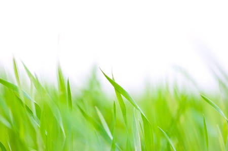 Grass background - selective focus.  Wheaten field photo