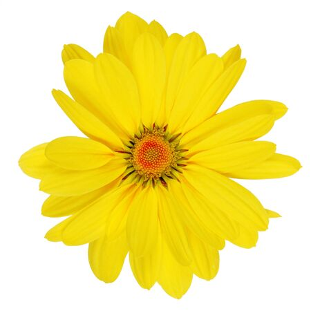Yellow daisy. flower Isolated over white background photo