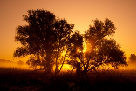 natural scenery: silhouettes of trees in orange sunrise backlit   woodland scene
