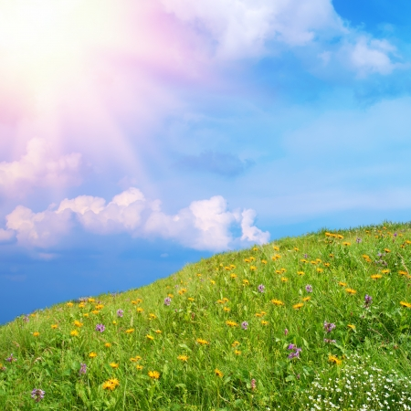 wild flowers in a meadow. The hills are covered with lush grass, daisies and blue flowers in the sunlight. against the blue sky with clouds photo