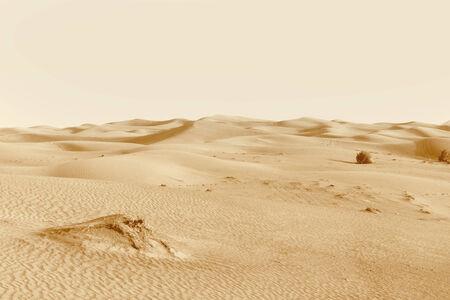 landscape dunes in the desert photo