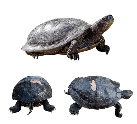 Set of turtles. turtles from different sides. isolated over white background. photo