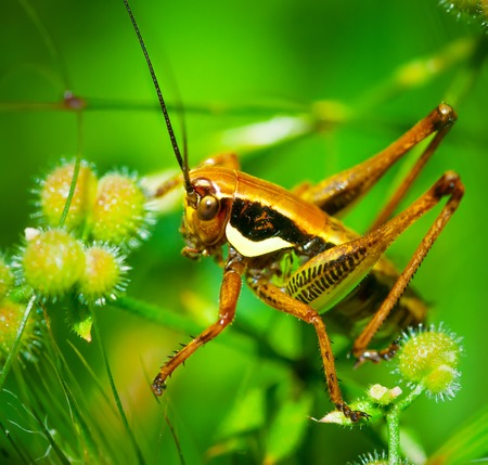 feelers: Green grasshopper sitting on leaf in the middle of the grass Stock Photo