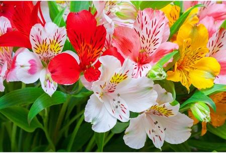 Альмерия фото цветы
