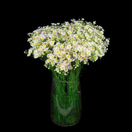 Bouquet Of Wild Daisies In A Glass Vase Isolated Over Black Stock