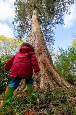 A small child playing in a forest standing in front of a very large tree Imagens