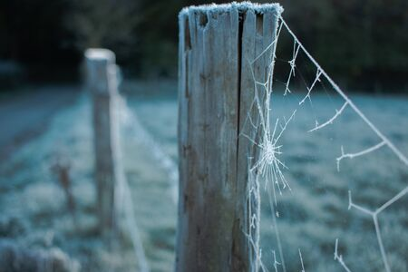 Frozen cobwebs or spider webs on a fence post on a frosty morning
