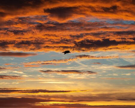 A silhouette of a single seagull flying at sunset