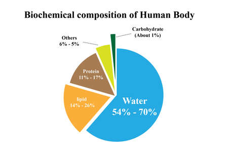 biochemical: Biochemical composition of Human Body Illustration