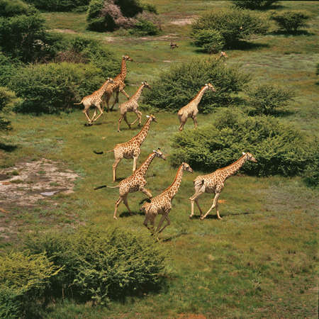 Giraffa Archivio Fotografico - 30207801