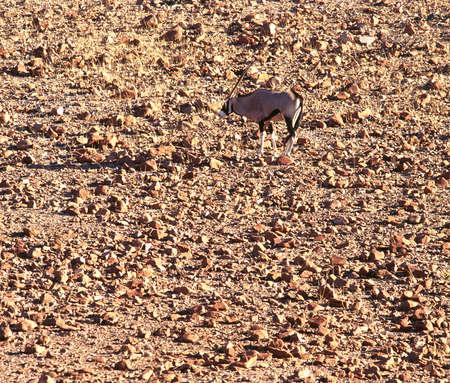 stole: Oryx