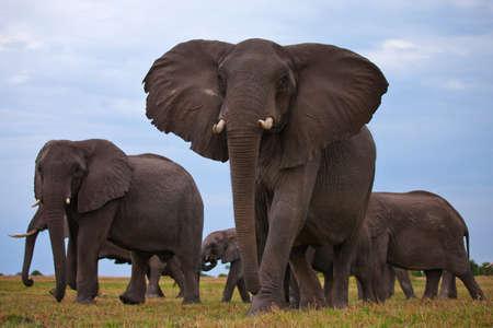 elephant: elephant