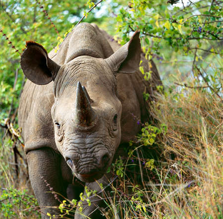 rhino: rhino Stock Photo
