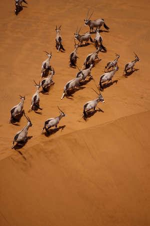 grote Afrikaanse antilope Stockfoto