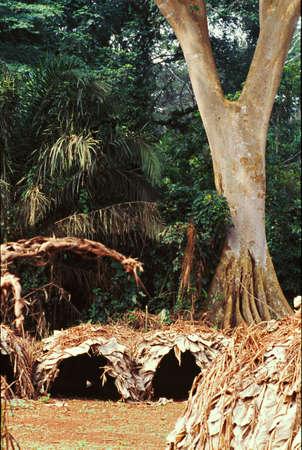 jungle landscape in gabon Stock Photo
