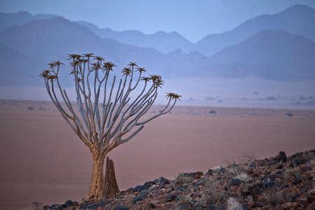 empty landscape of Namib desert