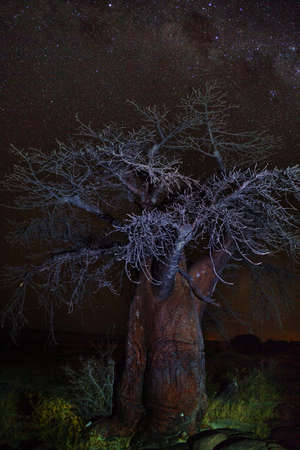Baobab under stars in namib desert